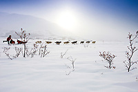 Paul Gebhart runs down the trail in Ptarmigan Valley six miles after leaving the Rainy Pass checkpoint during the 2010 Iditarod, Southcentral Alaska
