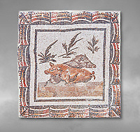 3rd century Roman mosaic panel of a boar and a sow lying down. From Thysdrus (El Jem), Tunisia.  The Bardo Museum, Tunis, Tunisia.  Grey background
