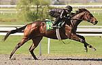 07 April 2011.  Hip #136 Street Sense - Emmaus colt, consigned by M.W. Miller.