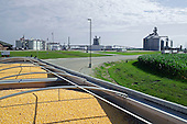 Wataga, Illinois<br /> July 11, 2014<br /> <br /> Tommy O'Connor, a family GMO corn and soy farmer as well as beef in central Illinois on his farm.
