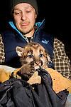 Mountain Lion (Puma concolor) biologist, Max Allen, holding six week old male cub, Santa Cruz Puma Project, Santa Cruz, Monterey Bay, California