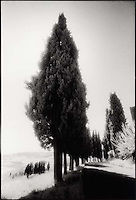 Row of trees along road<br />