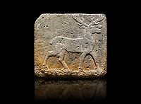 Hittite monumental relief sculpted orthostat stone panel from Water Gate Basalt, Karkamıs, (Kargamıs), Carchemish (Karkemish). 900-700 BC . Stag. Anatolian Civilisations Museum, Ankara, Turkey. With his large and many branched antler, he walks towards the right. <br /> <br /> On a black background.