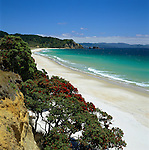New Zealand, North Island, Coromandel Peninsula: Otama Beach with Pohutukawa Tree in foreground | Neuseeland, Nordinsel, Coromandel Halbinsel: Otama Beach und Pohutukawa Baum im Vordergrund