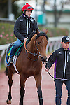 FUCHU,JAPAN-NOVEMBER 23: ,trained by Francis-Henri Graffard,exercises in preparation for the Japan Cup at Tokyo Racecourse on November 23,2016 in Fuchu,Tokyo,Japan (Photo by Kaz Ishida/Eclipse Sportswire/Getty Images)