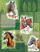 Interlitho, Daniela, GIFT WRAPS, paintings, horse portraits(KL7139,#GP#) everyday