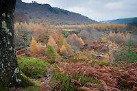 Powerscourt Estate, Enniskerry, County Wicklow, Ireland.