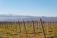 View over the snow capped Pyrenees mountains. Chateau Rives-Blanques. Limoux. Languedoc. Pyrenees mountains in haze on the horizon under a blue sky and a brilliant winter sunshine. France. Europe. Vineyard. Mountains in the background.