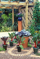Vegetable container garden with chard and blue cabbages in pretty ceramic pots on pebble patio, with scarlet runner bean trellis and arbor and perennial plant beds in backyard