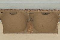 Nisthilfe, Nistkasten für Mehlschwalbe, Mehlschwalben selbst gebaut aus Ton, Lehm, Schwalbennest, Schwalbennester, Nesting help, nesting box for house martin, house martins of tone, loam, Delichon urbicum
