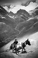 Ladakh Himalaya Inde. Photo : Vibert / Actionreporter.com