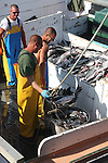 Fishermen unloading the day's catch from boat. Portsmouth, NH