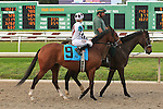 January 16, 2016: Zubi Zubi Zu with Mitchell Murrill up in the Marie G. Krantz Memorial Stakes race at the Fairground race course in New Orleans Louisiana. Steve Dalmado/ESW/CSM