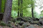 Europa, DEU, Deutschland, Hessen, Odenwald, Lautertal-Reichenbach, Naturschutzgebiet Felsberg, Wald, Felsenmeer, Steine, Granitsteine, Kategorien und Themen, Natur, Umwelt, Landschaft, Jahreszeiten, Stimmungen, Landschaftsfotografie, Landschaften, Landschaftsphoto, Landschaftsphotographie, Naturschutz, Naturschutzgebiete, Landschaftsschutz, Biotop, Biotope, Landschaftsschutzgebiete, Landschaftsschutzgebiet, Oekologie, Oekologisch, Typisch, Landschaftstypisch, Landschaftspflege....[Fuer die Nutzung gelten die jeweils gueltigen Allgemeinen Liefer-und Geschaeftsbedingungen. Nutzung nur gegen Verwendungsmeldung und Nachweis. Download der AGB unter http://www.image-box.com oder werden auf Anfrage zugesendet. Freigabe ist vorher erforderlich. Jede Nutzung des Fotos ist honorarpflichtig gemaess derzeit gueltiger MFM Liste - Kontakt, Uwe Schmid-Fotografie, Duisburg, Tel. (+49).2065.677997, ..archiv@image-box.com, www.image-box.com]