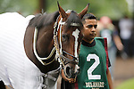 July 21, 2012  Tiz Miz Sue walks in the paddock before competing in the Delaware Handicap at Delaware Park, Stanton, DE. She finished second after a stretch dual with winner Royal Delta. ©Joan Fairman Kanes/Eclipse Sportswire