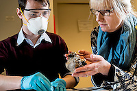 Belgium. Brussels. London. 17th November 2015<br /> (Name need) and Dr. Mietje Germonpré check an ancient dog skull after cutting a small piece for DNA testing .<br /> Andrew Testa for the New York Times