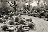 Cactus garden and path. The Living Desert. Palm Desert, California