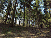 FOREST_LOCATION_90198