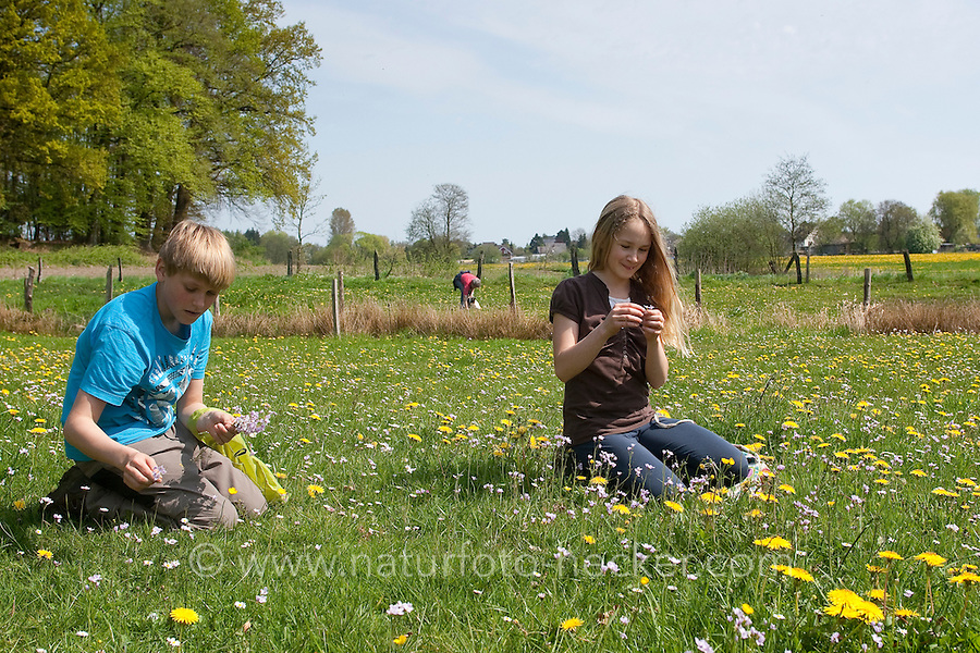 Kinder ernten, sammeln Kräuter im Frühjahr für Kräutersuppe und Wildgemüse - Salat, Wildkräuter, Ernte, Kräutersammeln, essbare Wildkräuter, Wiesen-Schaumkraut, Cardamine pratensis