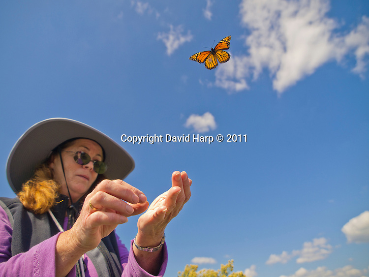 Naturalist Denise GIbbs tags monarch butterflies during their annual East Coast migration to Mexico.