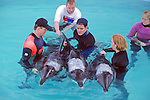 326 Wild Dolphin Societies Mid Dec. 1997 Stranding Rough-toothed Dolphins