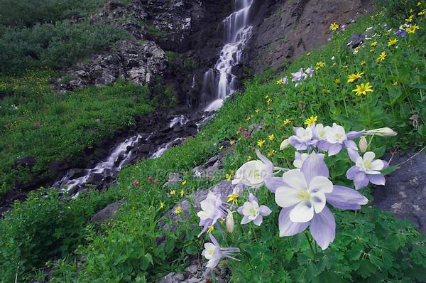 Waterfall and wildflowers in alpine meadow,Blue Columbine,Colorado Columbine,Aquilegia coerulea, Ouray, San Juan Mountains, Rocky Mountains, Colorado, USA, July 2007