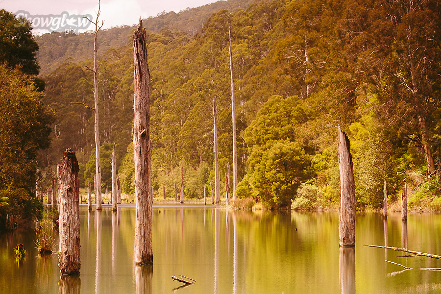 Image Ref: CA598<br /> Location: Lake Elizabeth, Forrest<br /> Date of Shot: 20.10.18