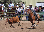 Debbie Johns competes in the women's steer stopping event the Minden Ranch Rodeo on Sunday, July 24, 2011, in Gardnerville, Nev. .Photo by Cathleen Allison