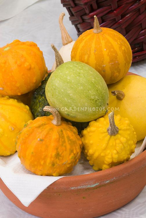 Gourd & squash harvest mixture picked in autumn vegetable