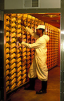 Large scale commercial incubator in a chicken hatchery.  Kenya.