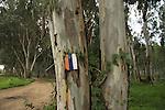 Israel, Sharon region, Israel Trail at Park Hasharon Nature Reserve