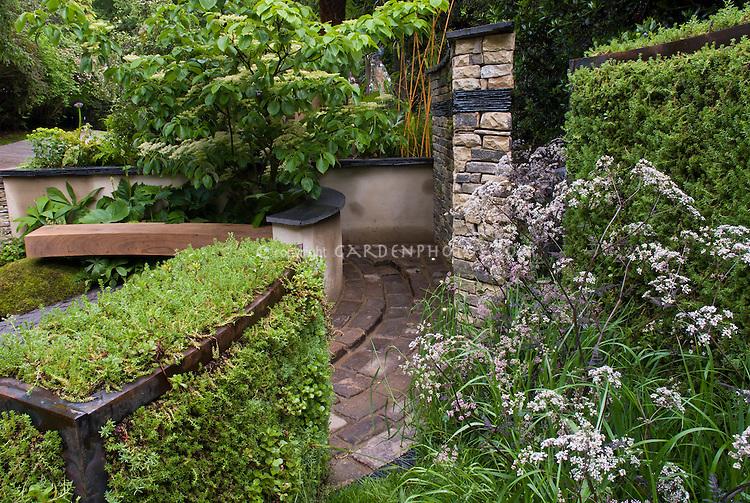 Sambucus nigra European elderberry in garden with bench, hedges, trees, brick walkway, patio