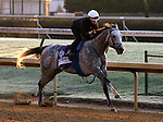 Irrefutable, trained by Bob Baffert and to be ridden by Rafael Bejarano , exercises in preparation for the 2011 Breeders' Cup at Churchill Downs on.October 30, 2011. (copyright Candice Chavez/Eclipse Sportswire)