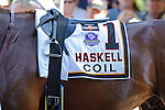 Coil Winner of the Haskell Invitational Stakes (Grade I) apart of the Breeders Cup  Classic Win and You're In  at  Monmouth Park Racetrack in Oceanport, NJ  on 7/31/11. (Ryan Lasek / Eclipse Sportwire)