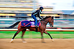 November 3, 2011: Perfect Shirl, trained by Roger Attfield and to be ridden by Patrick Husbands exercises in preparation for the 2011 Breeders' Cup at Churchill Downs on November 3, 2011.