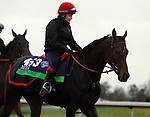 October 28, 2015: Impassable, trained by Carlos Laffon-Parias is cross entered in the Breeder's Cup Filly & Mare Turf $2,000,000 and has first preference in the Breeder's Cup Mile $2,000,000. Candice Chavez/ESW/CSM
