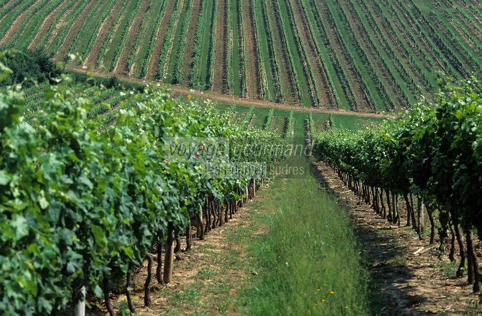 Europe/France/Aquitaine/33/Gironde: Le vignoble (AOC Premières côtes de Bordeaux)