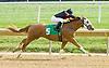 Chasing Greg winning at Delaware Park on 10/17/12