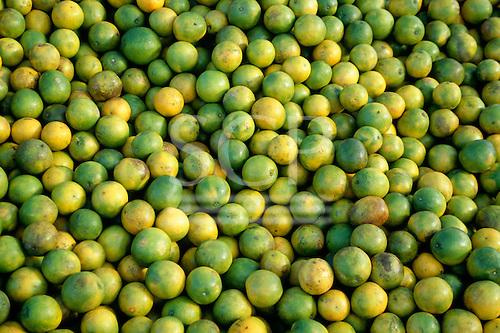 Sao Paulo State, Brazil. Mass of oranges.