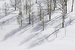 Aspen grove casts shadows across a snow covered hillside in Colorado.