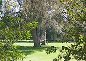 Backyard, Aiken, SC.