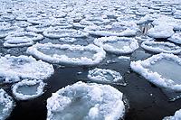 Great Lakes pancake ice on Lake Superior, Great Lakes of North America, Minnesota, USA
