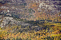 Tapestry of autumn foliage, Acadia National Park, Maine, ME