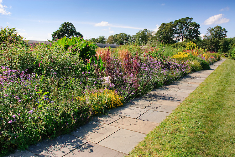 Verbena bonariensis and variety of different plants including ornamental grass, canna, etc, in long garden border next to path and lawn with blue sky and clouds on sunny day in summer at White Flower Farm