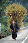 man, farmer (senior) carrying load of harvested rape (canola) plants; rural China near Wanxian; agriculture; 042103
