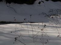 Tall grasses pushing through snow<br />
