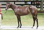 13 July 2010.  Hip #12 Latent Heat - Bronze Autumn filly.