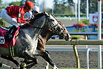 Turallure (no. 8), ridden by Julien Leparoux and trained by Charles Lopresti, wins the   15th running of the grade 1 Woodbine Mile Stakes for three year olds and upward on September 18, 2011 at Woodbine Racetrack in Rexdale, Ontario, Canada.  (Bob Mayberger/Eclipse Sportswire)