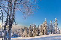 Snow and frost covered trees of the winter boreal forest landscape in the hills surrounding Fairbanks, Alaska.