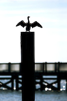 A bird is silhouetted stretches its wings on a deck in Charleston, SC.
